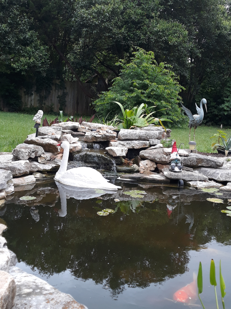 Name:  swan-3.jpg Views: 364 Size:  933.4 KB
