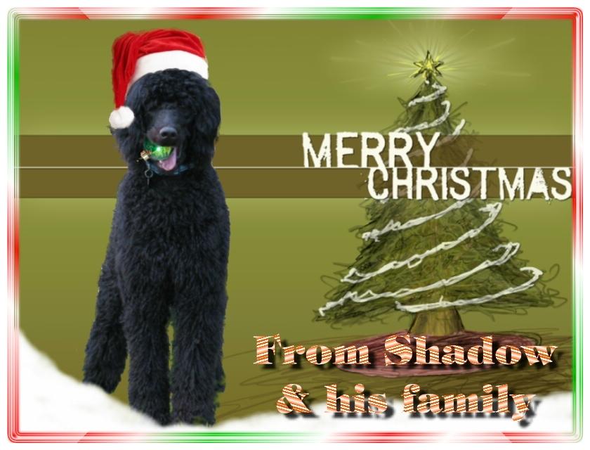 Name:  shadow-christmas-card-3.jpg Views: 2029 Size:  291.5 KB